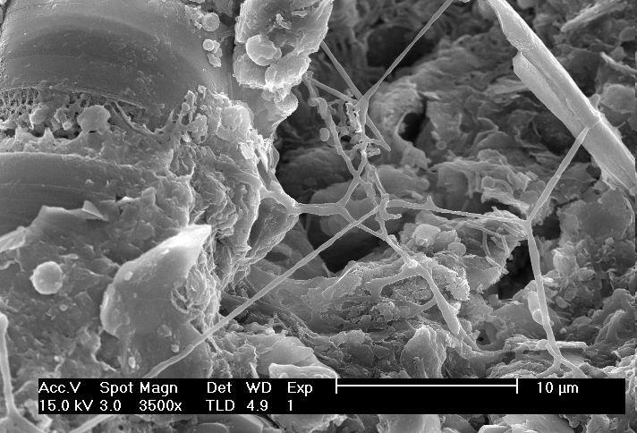 Dia3 for Soil under microscope