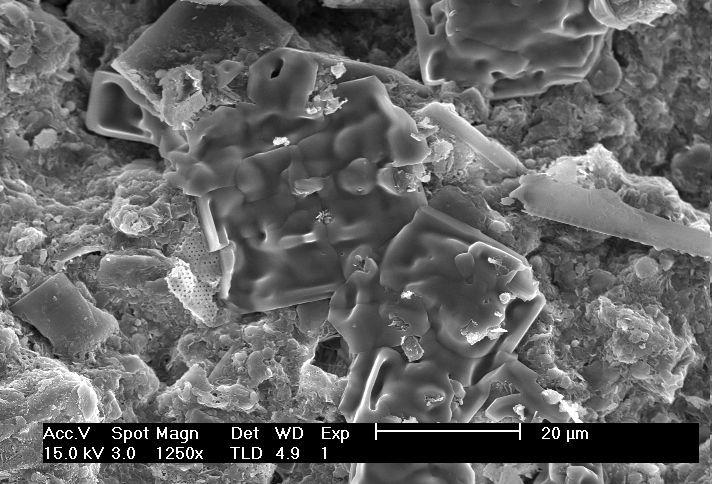 Dia8 for Soil under microscope