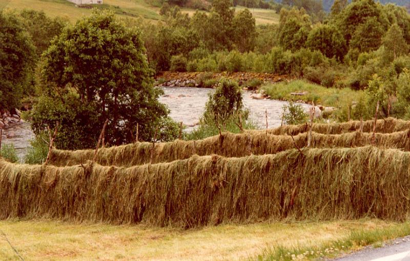 Drying Hay In Norway