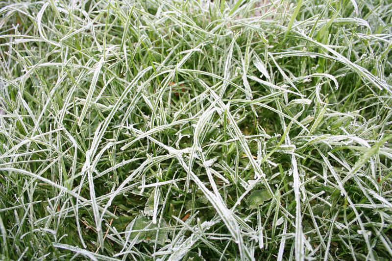 Grass Lawn 06 frost ice