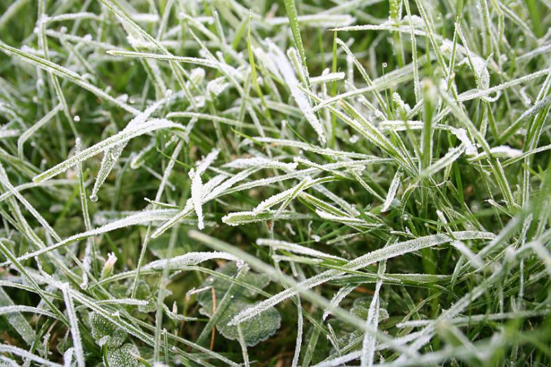 Grass Lawn 09 frost ice