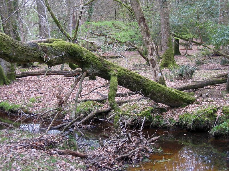 Tree fallen across a stream