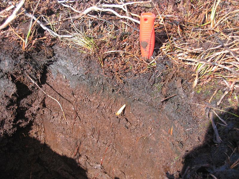 Peat soil profile 04 for Example of soil