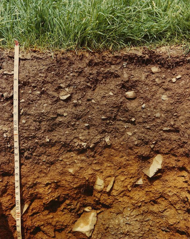 Soil Gas Soil Gas Survey