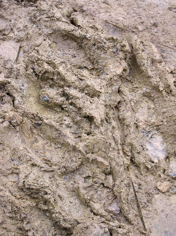 Wet Clay Soil Garden Design Ideas