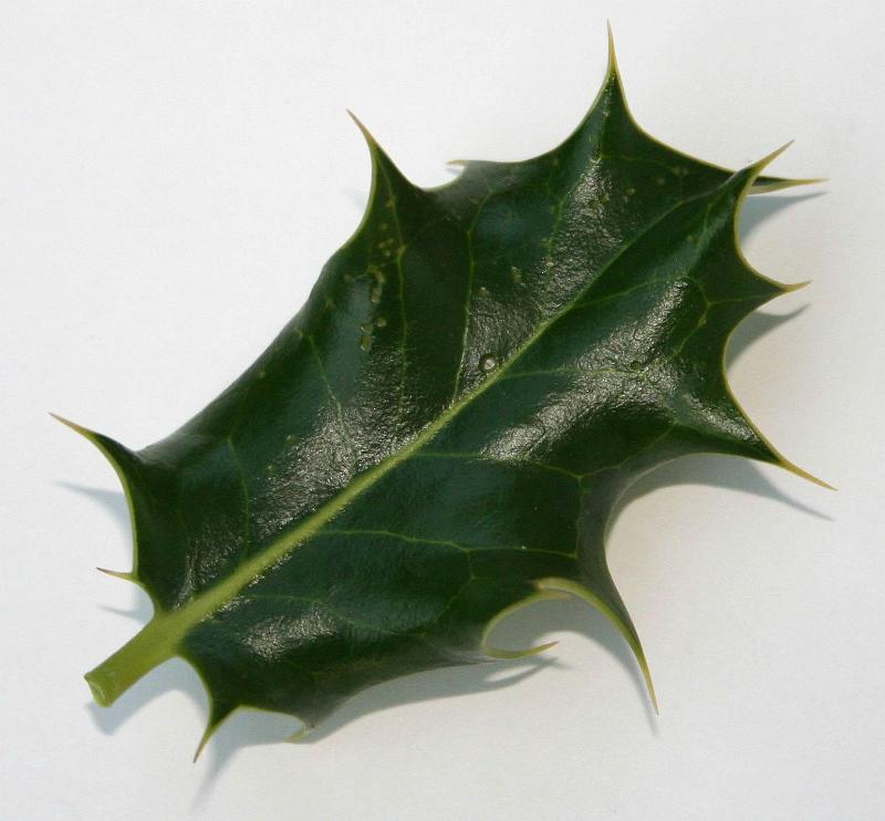 Holly Leaf : New Calendar Template Site