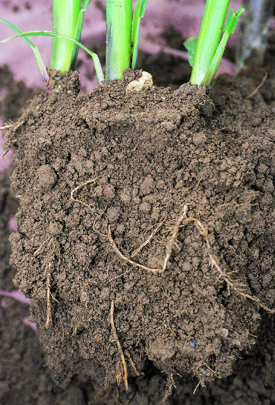 Sandy loam soil characteristics as or clay pictures for What are soil characteristics