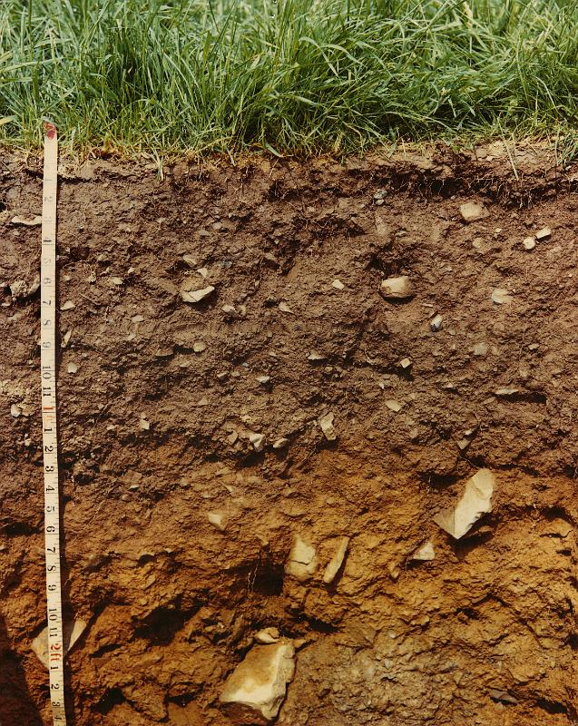 Brown soil for Organic soil definition