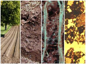 This image shows the different scales at which we can consider soil. Here we see the field scale, the soil profile, the macro-scale and the micro-scale. Image credit: Karl Ritz