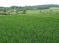 A field of arable crops