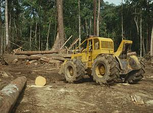 Deforestation of tropical and sub-tropical forests causes enormous envinonmental problems downstream. Image credit: Ian Baillie
