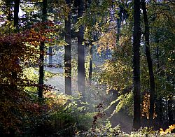 A broadleaved deciduous woodland. Image credit and copyright: Adrian Yallop