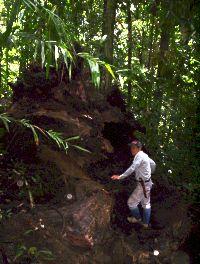 Soil-Net.com - The Tropical Rainforest