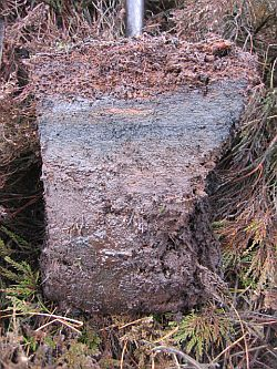 Peat in its natural state. Image credit and copyright: Rodney Burton