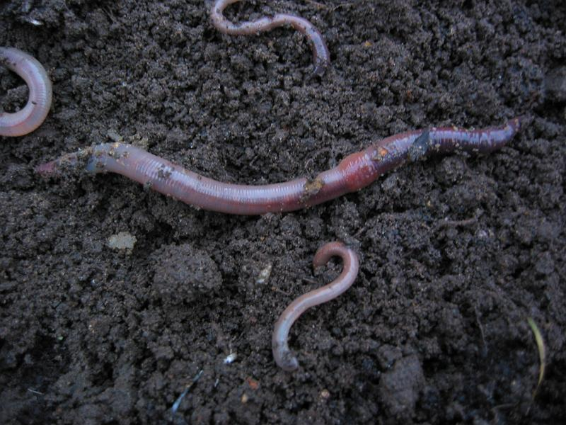 dating.com Worms